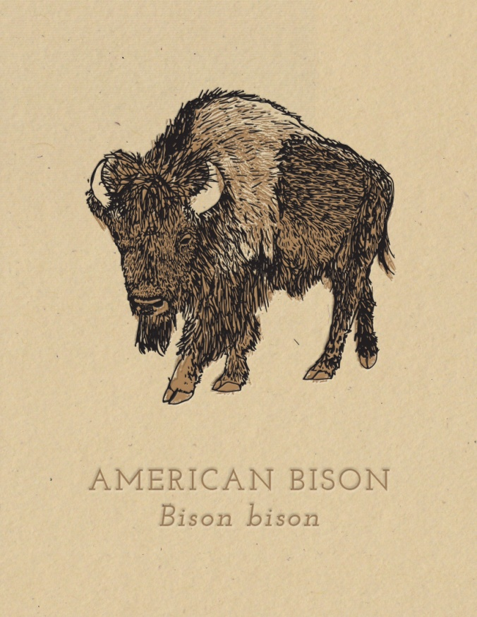 american bison konza card mock 2